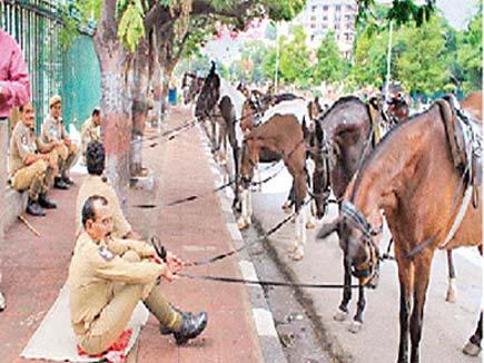घोड़ों पर साल में करोड़ों खर्च करती है उप्र सरकार